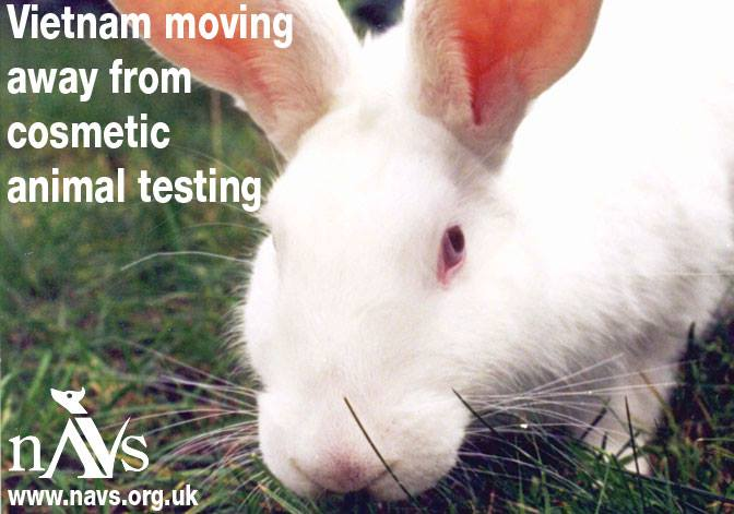 the ethical research of animal testing Michelle thew from cruelty free international explains why animal testing of cosmetics ban on animal cosmetics testing ethical consumer research.