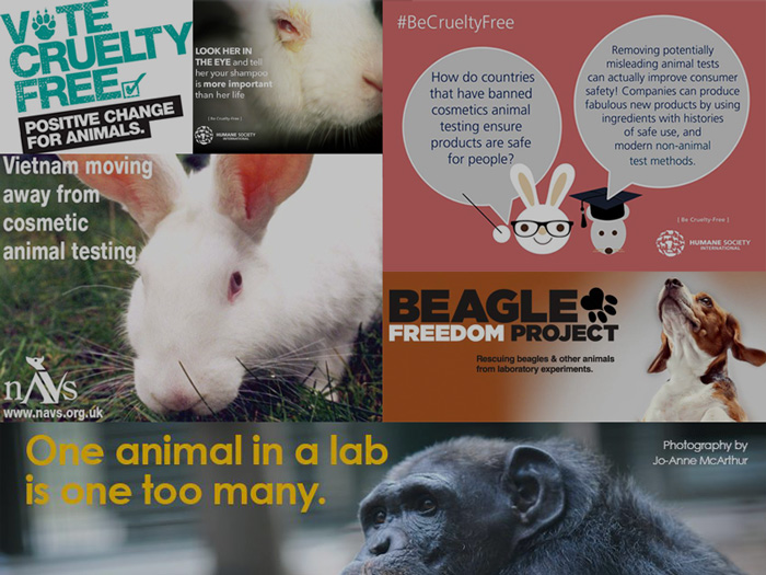 List Of Charities Against Animal Testing Ethical Elephant