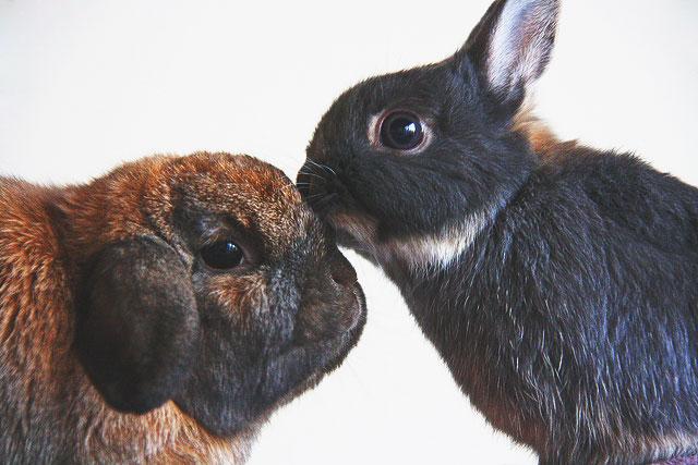 bunny_kisses