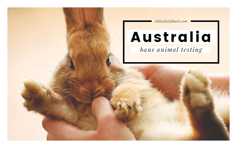 Australia Bans Animal Testing Cosmetics