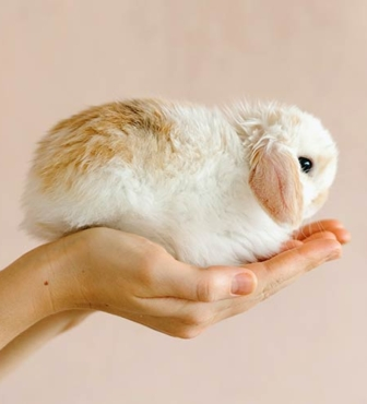 What Does Cruelty-Free Mean in 2021?