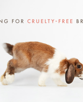 Cruelty-Free Brands List